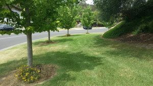 Lawn Mowing Doncaster East